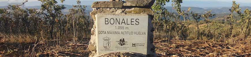 Bonales1