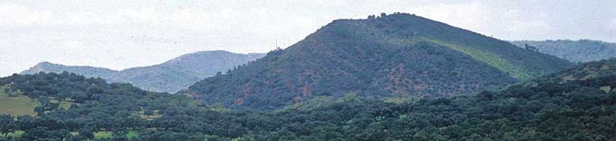 Sierraaracena